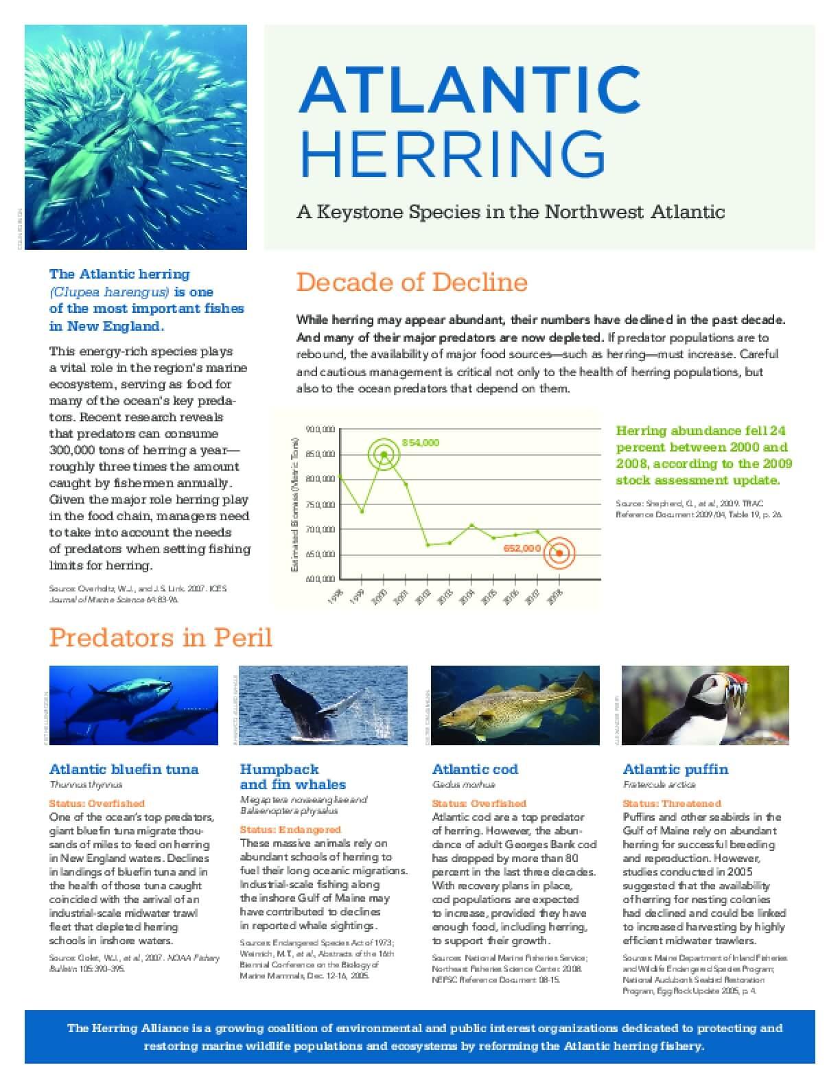 Atlantic Herring - A Keystone Species in the Northwest Atlantic